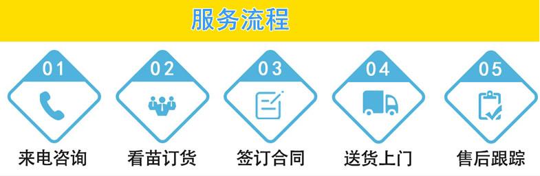 郫县名川园艺服务流程